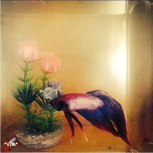 betta fish care - vixph